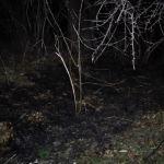 Požar u Šebecima! Izgorelo oko 5ha niskog rastinja (FOTO)