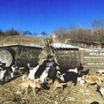 Druženje u Centru za napuštene pse