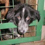 """JKP """"Naš dom"""" Požega planira eutanaziju 1300 od 1500  uhvaćenih pasa"""