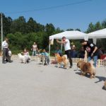 Izložba pasa u Gornjem Milanovcu