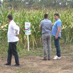 Ovogodišnji rod kukuruza iznad proseka