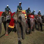 Slonovi igraju fudbal – 13. Festival slonova u Nepalu