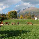 Država obećava subvencije za mlade poljoprivrednike