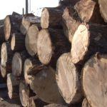 Tražnja za ogrevom sve veća – drva skuplja, a uglja nema