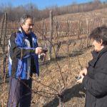 Porodica Babanić o svojim vinogradima i povratku na selo
