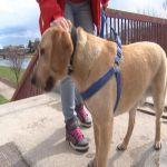 Da li je dozvoljeno šetati psa bez povodnika i korpe?