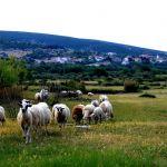 Konkurs za dodelu bespovratnih sredstava za razvoj kozarstva i ovčarstva