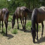"""Svi ti divni konji: Azil """"Staro brdo"""" utočište za napuštene, namučene i odbačene"""