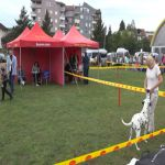 Završena druga godišnja međunarodna izložba pasa svih rasa u Milanovcu