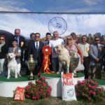 Srednjeazijski ovčar najlepši na Međunarodnoj izložbi u Čačku