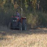 Odabir semena, primena agrotehničkih mera i poštovanje rokova za setu – ključ dobrog prinosa ratarskih kultura