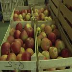 Za dva meseca počinje izgradnja srpsko-mađarske firme za preradu voća u Arilju