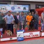 Nacinalna izložba pasa održana u Milanovcu