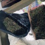 Zaplena marihuane u Gornjem Milanovcu
