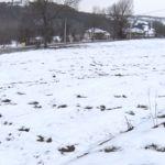 Sneg dobar za pšenicu i ostale ozime useve
