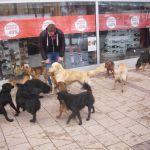 Milanovac: Krivične prijave protiv nemarnih vlasnika pasa