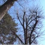 Novih 1000 stabala u Čačku
