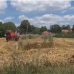 Završena žetva pšenice na teritoriji Moravičkog okruga, ovogodišnji rod manji za 30 posto