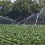 Tropske temperature štete povrtarskim kulturama